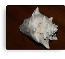 Conch Canvas Print