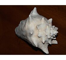 Conch Photographic Print