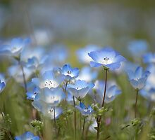 Blue Wildflowers by kattand