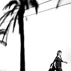 iPhone Palm Tree by Jon Yager