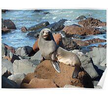 New Zealand Fur Seal Poster