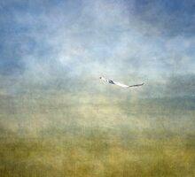 Fly by... by Julian Escardo
