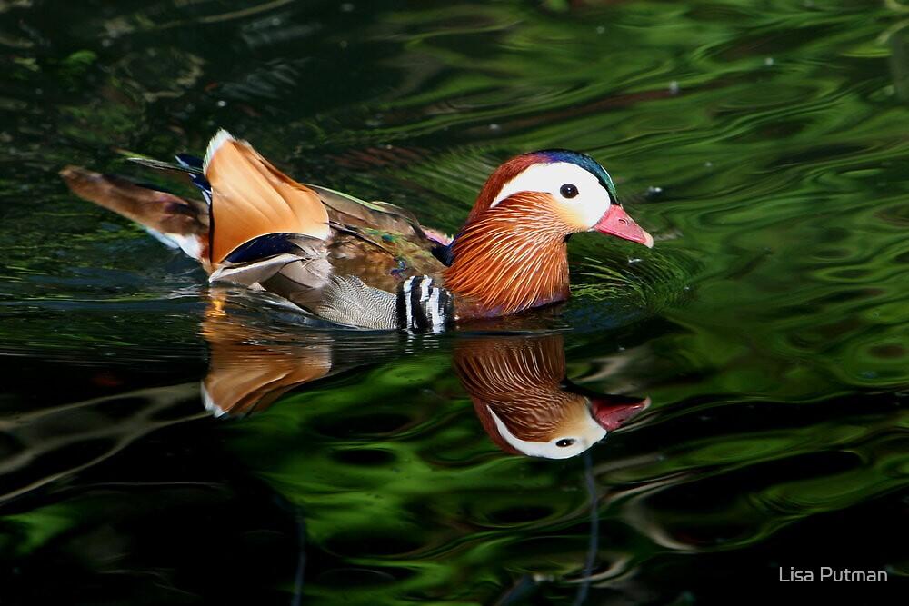 Mandarin Reflections by Lisa G. Putman