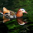 Mandarin Reflections by Lisa G. Putman