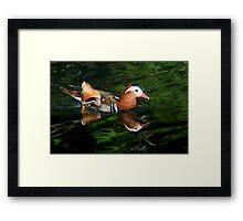 Mandarin Reflections Framed Print