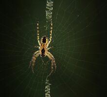 world wide web by Anthony Mancuso
