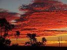 """'Dawn """" by debsphotos"""