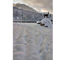 Alpine winter Photographic Print