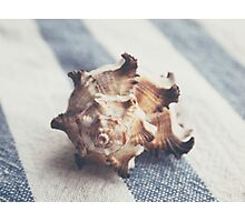 Shell 4 Photographic Print