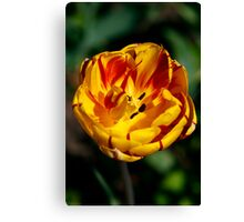 Oh So Sharp Canvas Print