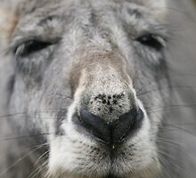 The nose by Denzil