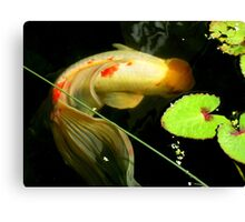 Koi with lovely tail. Canvas Print