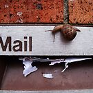 Snail Mail by pyko