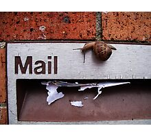 Snail Mail Photographic Print