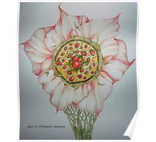Floribunda Immensus Poster