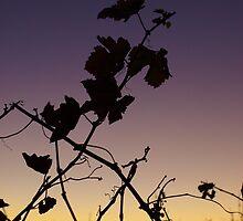 Sunset & Vine by Kazzii