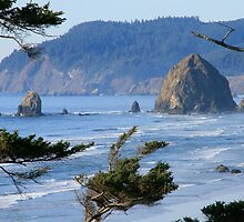 Oregon Coast by Shannon Sneedse