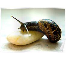 Snail #3 Poster