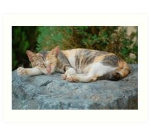 Cat tired and sleeping shhh.... Art Print