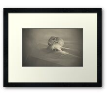 light travels Framed Print