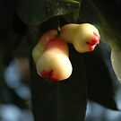 rose apple by bayu harsa