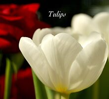 Tulips by JpPhotos