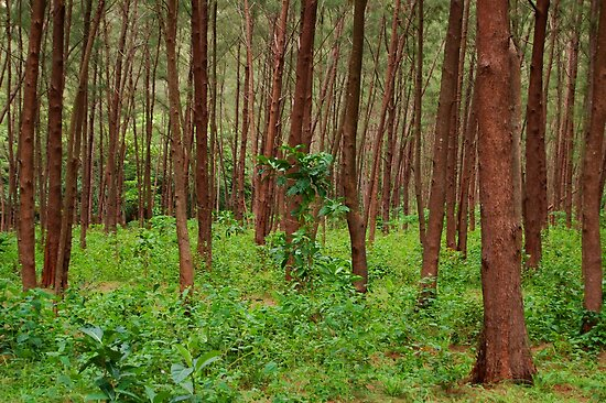 Forest and bushes in Zambales, Philippines by walterericsy