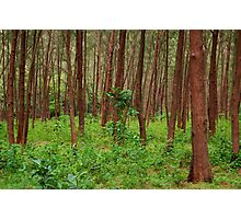 Forest and bushes in Zambales, Philippines Photographic Print