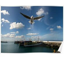 Seagull soar in harbour Poster