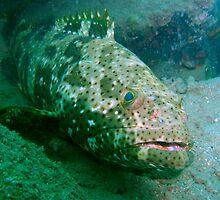 Grumpy Grouper by Robbie Labanowski