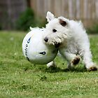 On the Ball by Gemma  Simpson