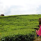 Ugandan Tea Plantation by Derek McMorrine