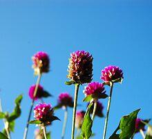 purple cone flower by bayu harsa