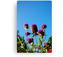 purple cone flower Canvas Print