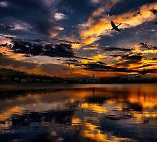 Wings of Light by LudaNayvelt