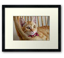 Marmalade Caturdays - 1 Framed Print