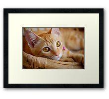 Marmalade Caturdays - 2 Framed Print