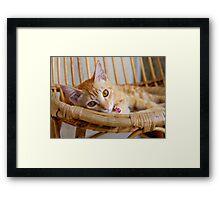 Marmalade Caturdays - 3 Framed Print