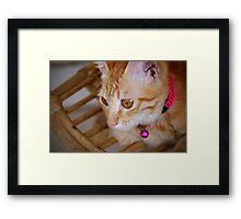 Marmalade Caturdays - 5 Framed Print