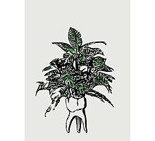 Tooth Plant Photographic Print
