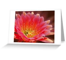 Pink Trichocereus Blossom Greeting Card