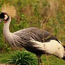 Crested Crane  by Stan Owen