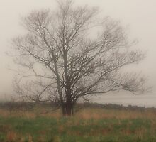 Tree in Fog, Yarmouth Nova Scotia by Debbie  Roberts
