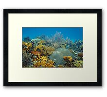Underwater landscape in an healthy coral reef Framed Print