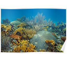 Underwater landscape in an healthy coral reef Poster