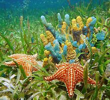 Underwater life with colorful sponges and a starfish by Dam - www.seaphotoart.com