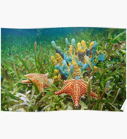 Underwater life with colorful sponges and a starfish Poster