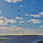 Gulls over Langstone Harbour by lezvee