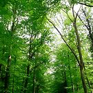 Spring in Forest by wistine