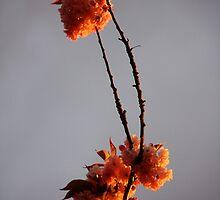 Reaching for the sky by Sonia de Macedo-Stewart